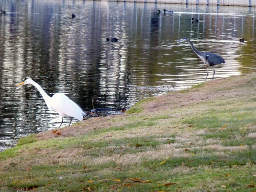 Egret and heron share a shoreline